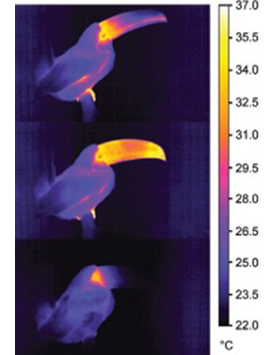 Toucan infrared